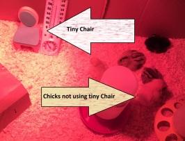 tiny-chair