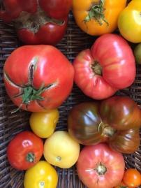 Daisy Hill Farm tomatoes