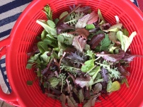 Greens harvested in February