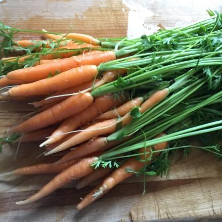 yaya carrots sq